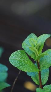 cropped-green_mint.jpg