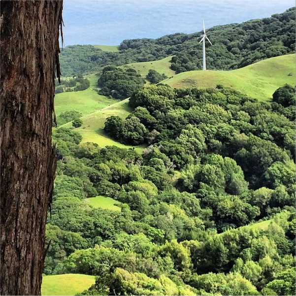 McEvoy Ranch Wind Turbine in Marin County, California